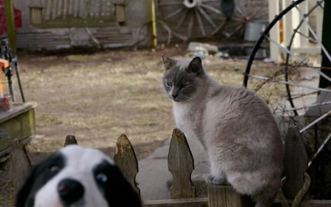 Esses 5 mitos sobre cães e gatos vão te surpreender