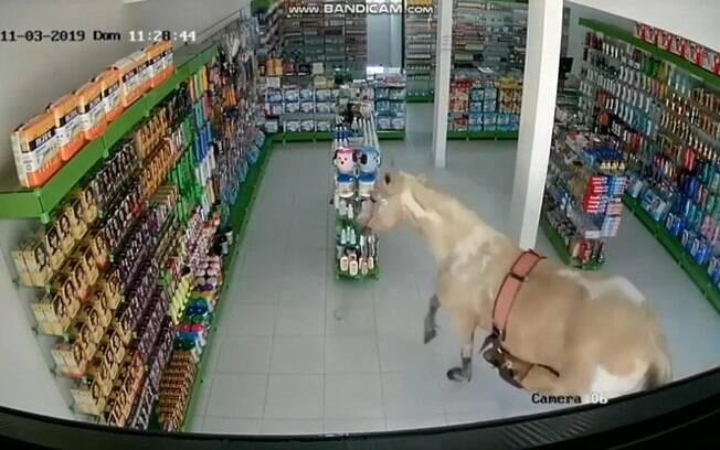 Égua entrou em farmácia e foi flagrada por câmeras de segurança