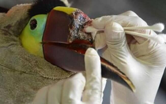 Veterinária Carmen Soto cuida do animal, que ainda está em fase de crescimento