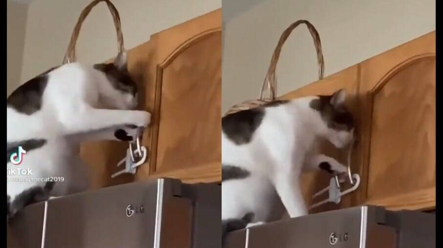 Gato tentando abrir armário