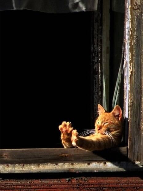 Confira fotos de gatos fofíssimos que amam um banho de sol
