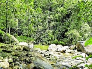 Sobrevivência.  A preservação das árvores é a própria sobrevivência da espécie humana, e o desmatamento desmedido tem trazido consequências como a escassez de água