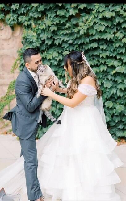Gato e noivos