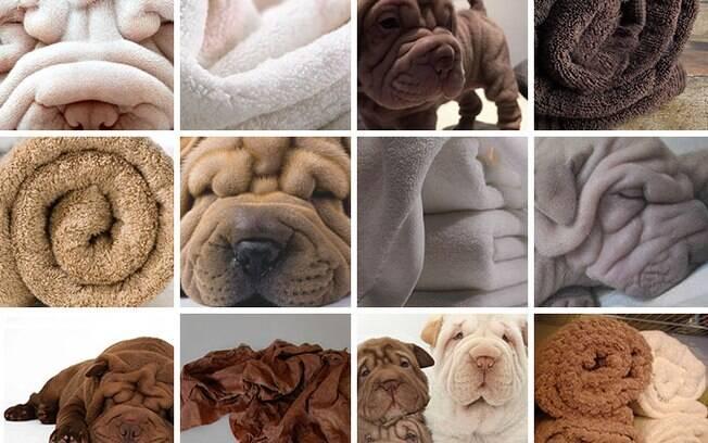 Cachorro ou toalha