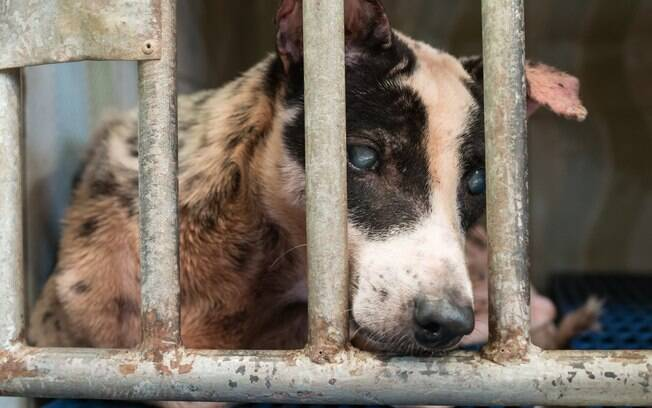 Animais sadios devem ser direcionados para a adoção, e não ao sacrifício