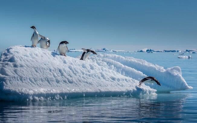 Visitar colônias de pinguins, elefantes-marinhos, focas-leopardo estão entre as atrações turísticas oferecidas pela Antártica
