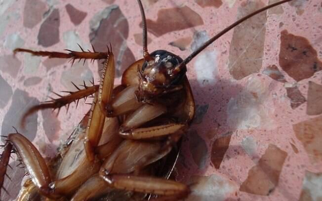 Cliente chegou a colocar inseto dentro da boca
