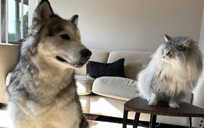 Milo e Teddy vivem no Reino Unido