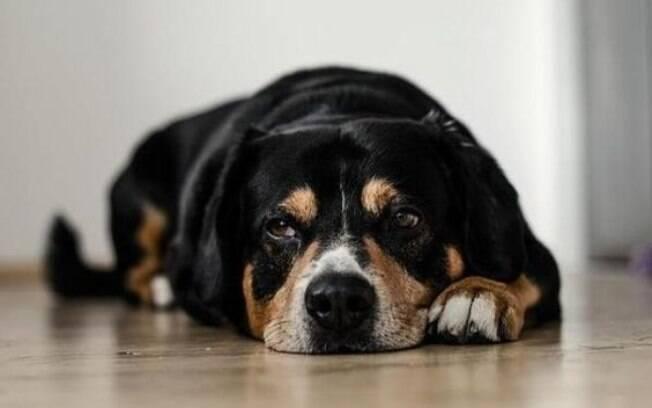 As visitas ao veterinário devem ficar mais frequentes quando o cão fica idoso para evitar o problemas maiores