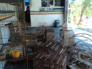 Animais estavam em gaiolas, penduradas em uma parede