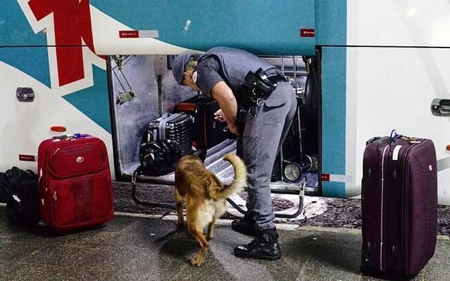 Policial do Canil da PM e seu parceiro conduzindo uma busca em um ônibus