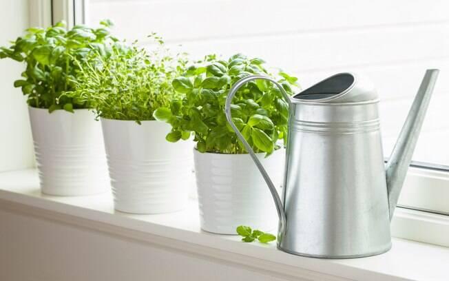 Ervas e temperos frescos podem ser cultivados em hortas em casa, mas com esses truques até aqueles comprados na feira vão durar mais