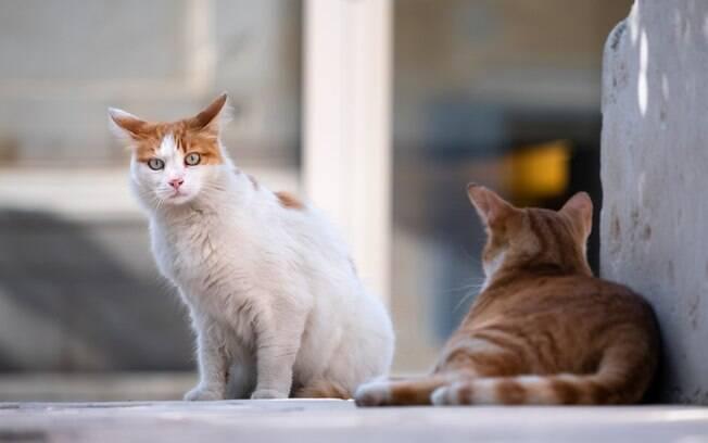 Como fazer para seus gatos se deêm bem?