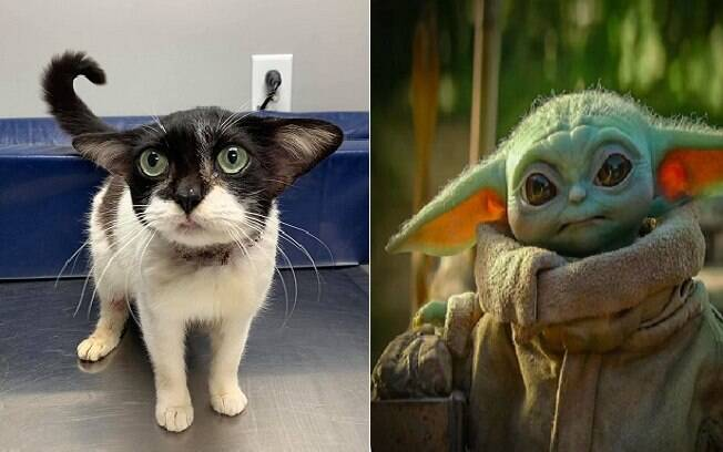 Foto da gata em comparação com o personagem Yoda