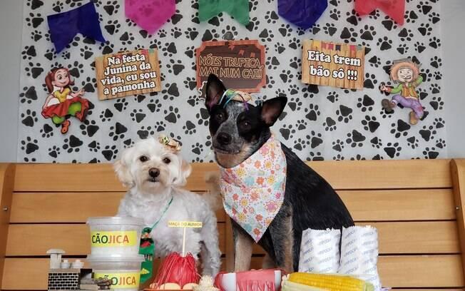 DogHero preparou um tutorial de fotos temático para os pets na festa junina