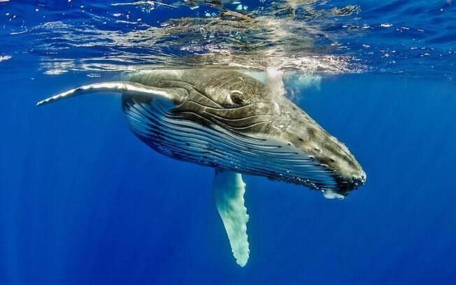 O Japão tentou aprovar o fim da proibição da caça de baleias, contudo, a maioria dos países rejeitou o projeto