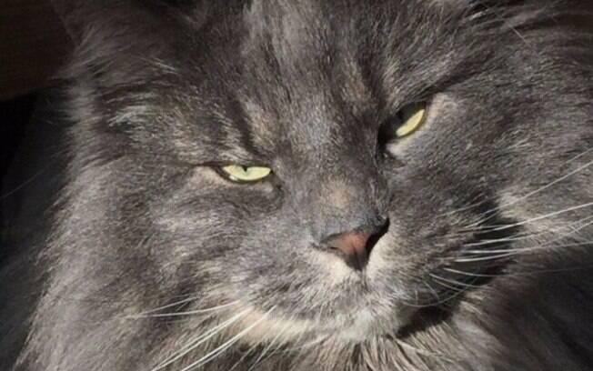 Esse gato simplesmente ridiculariza sua tentativa de deixar crescer isso que chama de barba