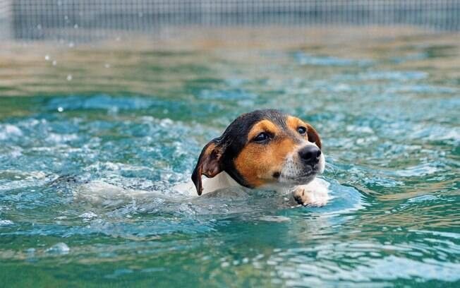 É importante ensinar o cão a nadar mesmo que já tenha nascido com habilidade para o esporte
