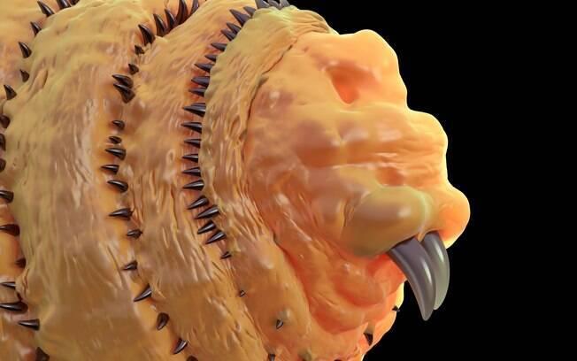 Esta é a larva que causa a miíase nos animais e pessoas.