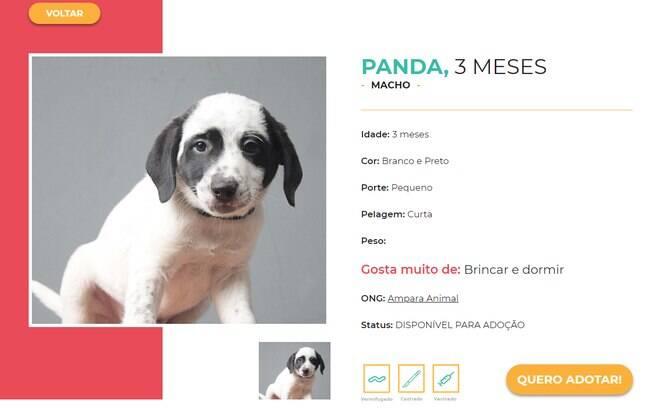 No site da Copa Da Adoção tem uma ficha com todas as informações do cachorro e um botão para se candidatar