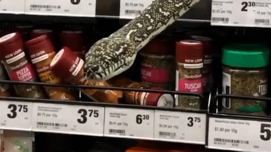 Cobra píton de 3 metros surge em prateleiras de mercado na Austrália