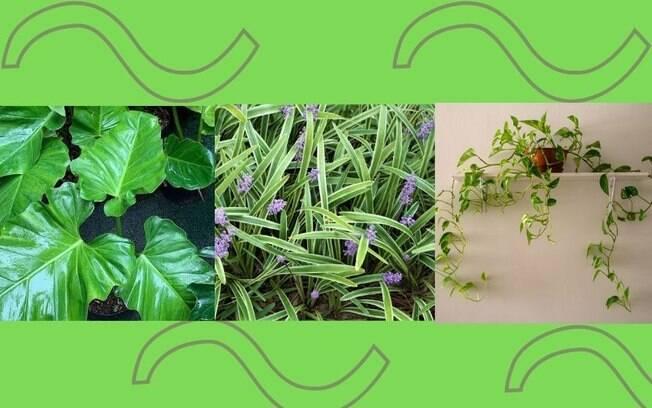 5 plantas que crescem rápido para ter em sua casa