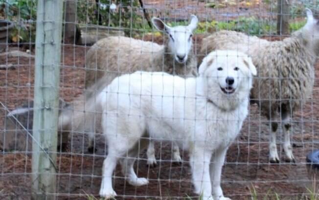 Justiça sentencia corte das cordas vocais de cães por latirem demais e incomodarem os vizinhos