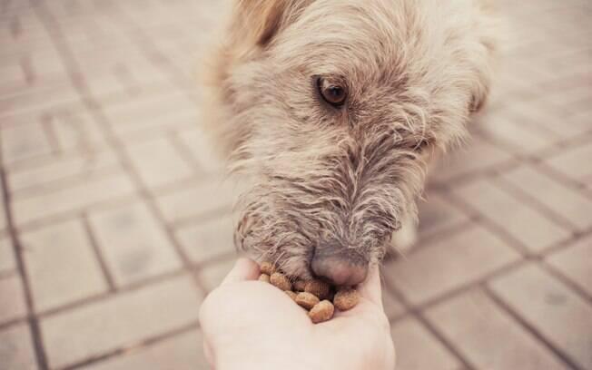 Quando a velhice chega, é importantes trocar a ração para a sênior, pois é mais indicada para cães idosos, assim como oferecer vitaminas