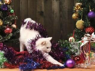 Cuidado com os pets e a decoração de natal
