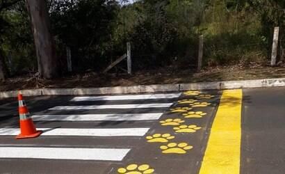 DF instala faixa de travessia para animais silvestres