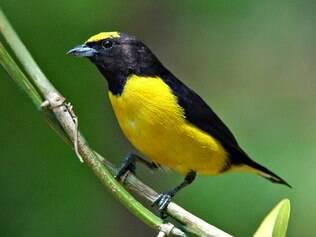 No Parque das Aves, o visitante percorre uma trilha de 1 km, em uma visita que dura aproximadamente 1h30.  O parque tenta recriar o ambiente natural em que as aves vivem na natureza.