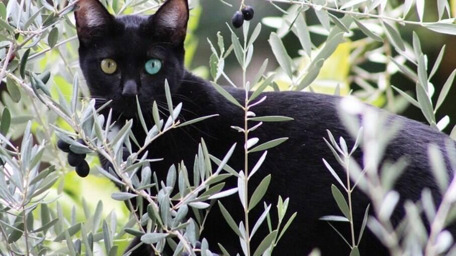 Apesar de ser algo muito mais comum em gatos brancos, ou com manchas brancas pelo corpo, pode acontecer também com outros animais de cores variadas