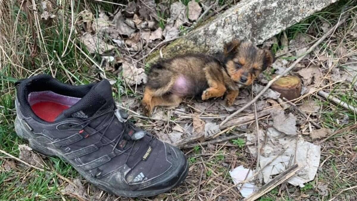 Filhote de cachorro encontrado em um tênis velho ganha uma nova vida