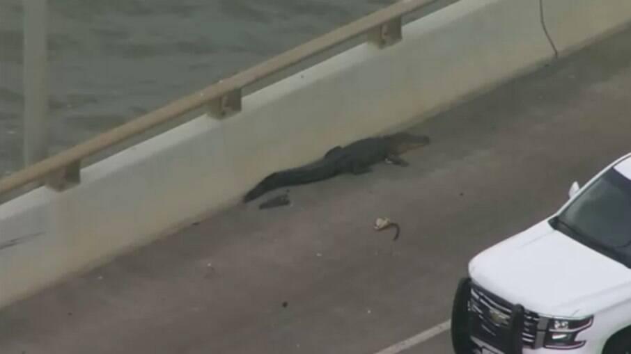 Crocodilo apareceu em ponte do Texas (EUA)