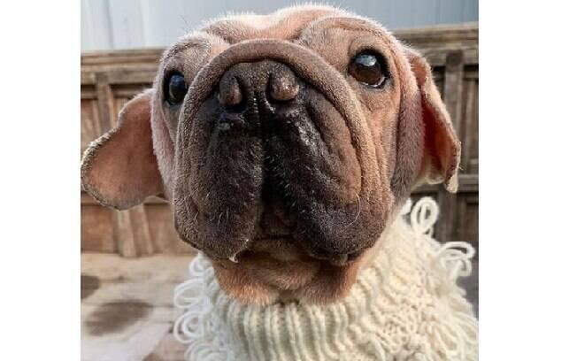 Cachorro Mork vestindo roupinha