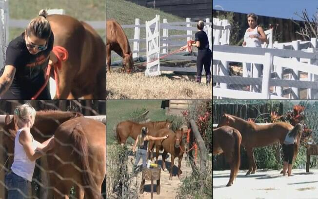 Dani, Raquel, Anna e Joana cuidam dos cavalos