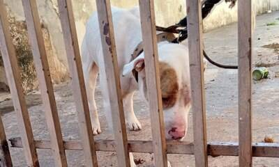 Violência contra animais pode ser reportada à Delegacia Eletrônica de SP