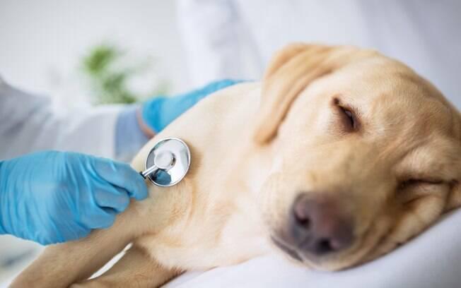 O veterinário é o único profissional capacitado para cuidado do seu animal epilético.Sempre que houver complicações relacionadas à doença, não deixe de fazer uma visita