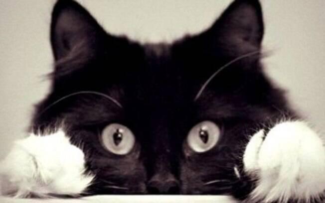 Mesmo sendo um animal fofo, o gato pode surpreender com o seu comportamento
