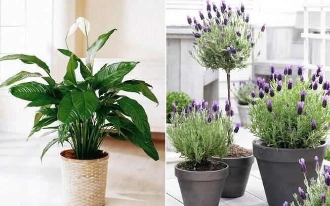 Fazer decoração com plantas em casa é uma tendência criativa e, dependendo da espécie, pode fazer bem à saúde