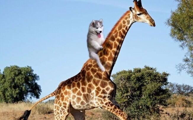 Passeando com a girafa