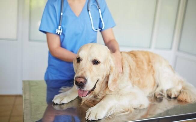 A citologia vaginal é um exame médico que tem por finalidade avaliar as células do epitélio vaginal, ou seja, ele verifica o estado do sistema reprodutor da cadela