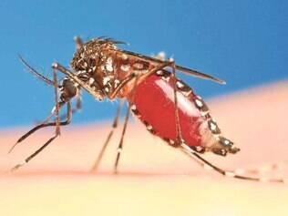 Brasil registra transmissão de vírus