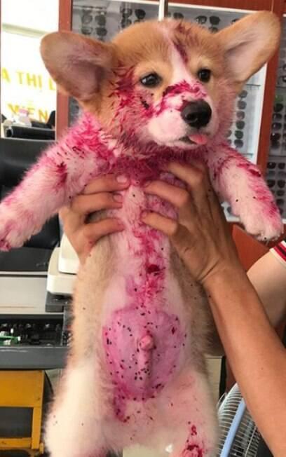 cachorro sujo