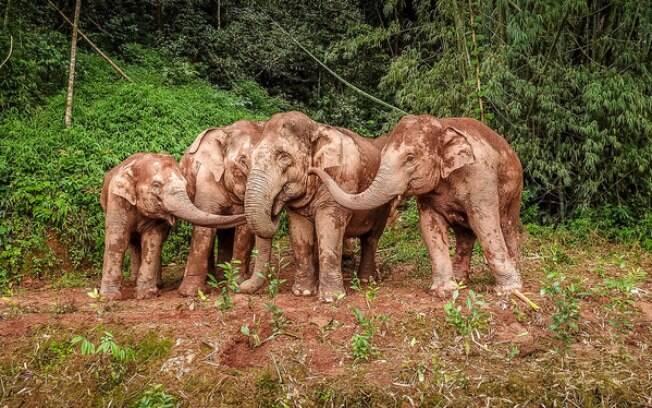 O COP15 começa em Kunming, evento que comemora elefantes asiáticos como