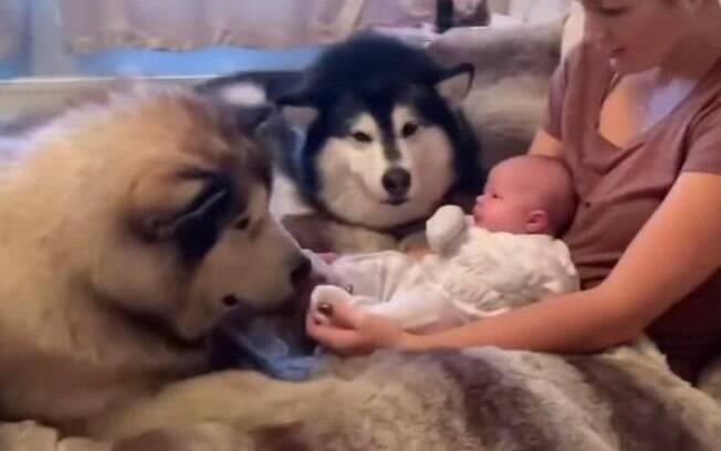 Estes cachorros estão encantados pela irmãzinha humana