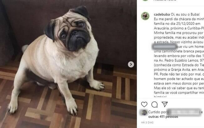 Cachorro foi recuperado após casal tentar extorquir donos
