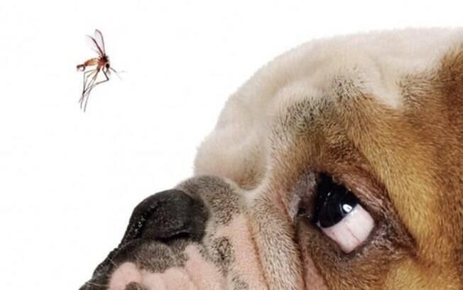 A leishmaniose é uma doença propícia a acontecer nos pets durante a primavera
