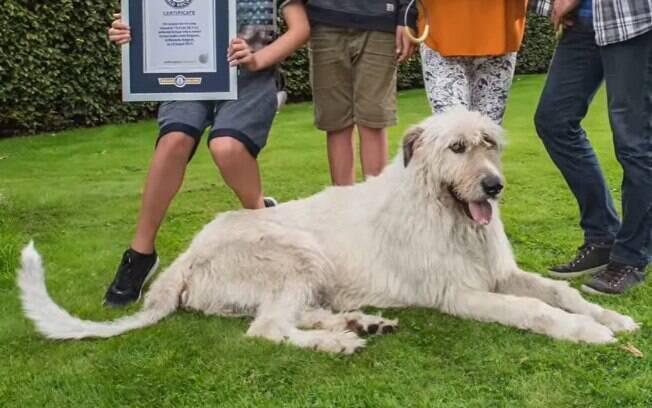 Cachorros que foram parar no Guinness Book