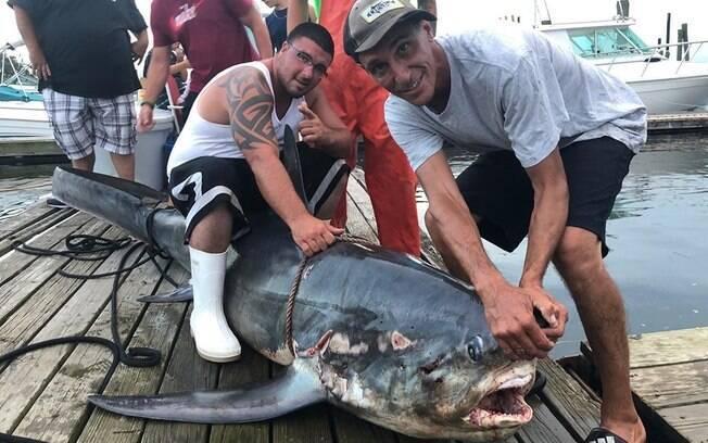 Fotos do tubarão foram divulgadas nas redes sociais